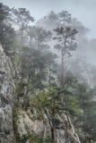 Tasnei Gorge, Romania Stock Image