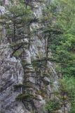 Tasnei Gorge, Romania Royalty Free Stock Photos