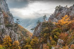 Tasnei wąwóz, Rumunia Fotografia Stock