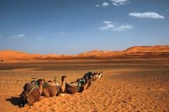 Tassì del deserto Fotografia Stock Libera da Diritti