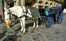 Tassì trainato da cavalli nella città di Firenze, Italia   Immagine Stock