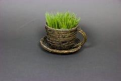 tasse avec l'herbe Images libres de droits