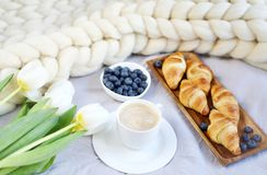 Tasse avec le cappuccino et les croissants, baies, couverture géante en pastel blanche de knit photo stock