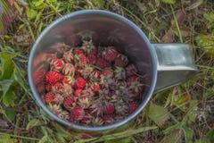 Tasse avec les fraisiers communs Image stock