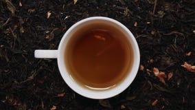 Tasse blanche de porcelaine de thé noir parmi les feuilles de thé sèches Vue supérieure banque de vidéos