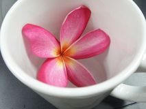 Tasse blanche de thé et Plumeria rouge de floraison Image stock