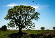 Tasse d'arbre feuillu dans le domaine photographie stock