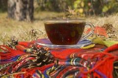 Tasse d'automne de thé Image libre de droits