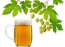 Tasse de bière et houblon frais Photographie stock libre de droits
