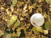 Tasse de café chaud dans le jour d'automne de soleil Photo libre de droits
