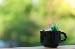 Tasse de café sur le plancher et le fond en bois de bokeh Photos stock