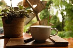 Tasse de cappuccino chaud et plante en pot sur la table en bois Photographie stock libre de droits