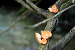 Tasse de champignons images libres de droits