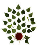 Tasse de feuilles de bouleau de thé et de vert d'isolement image stock