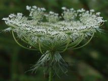 Tasse de fleurs petit leafage blanc Photo libre de droits