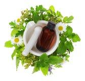 Tasse de thé chaud et mortier avec des herbes photographie stock libre de droits