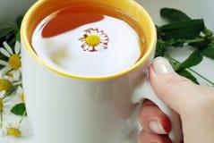 Tasse de thé de prise de main Photos libres de droits