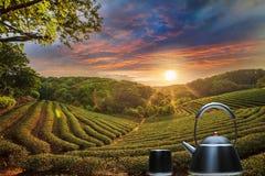 Tasse de thé et de menthe avec le fond gentil Photographie stock