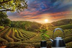 Tasse de thé et de menthe avec le fond gentil Images stock