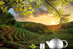 Tasse de thé et de menthe avec le fond gentil Photo libre de droits