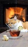 Tasse de thé sur la table contre le contexte du feu dans la cheminée Image libre de droits