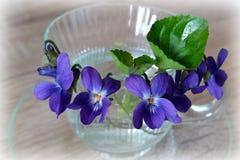 Tasse de violettes Image stock