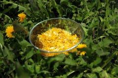 Tasse en verre pleine des pétales jaunes de pissenlit Photo stock