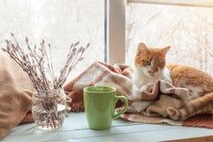Tasse Kaffee auf dem Fensterbrett Stockfotografie