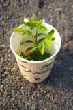 Tasse Kaffee-Bäume lizenzfreie stockfotografie