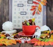 tasse rouge avec une écharpe tricotée, des châtaignes et des glands dans la perspective d'un calendrier d'automne Photo stock
