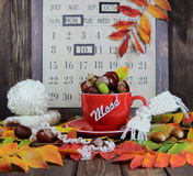 Tasse rouge avec une écharpe tricotée, des châtaignes et des glands dans la perspective d'un calendrier d'automne avec une humeur Photo libre de droits