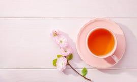 Tasse Tee und blühende Mandel Prunus triloba Niederlassung auf hellrosa Holztisch und Kopienraum für Text Lizenzfreie Stockbilder