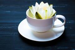 Tasse Wasser-Lilie auf einem schwarzen hölzernen Hintergrund Stockfotos