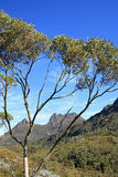 Tassy cradle mountain. Looking through the trees at Cradle Mountain in the background Royalty Free Stock Photo