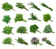 Tastatore dell'erba Fotografia Stock