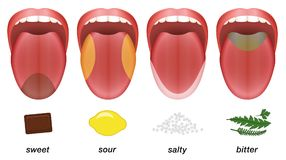 Taste areas tongue sweet sour salty bitter. Taste areas of the human tongue - sweet, sour, salty and bitter represented by chocolate, lemon, salt and herbs Royalty Free Stock Image