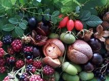 Taste of blackberries Stock Photo