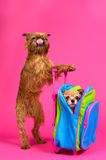 The taste of travelling - dogs with suitcase Royalty Free Stock Photos