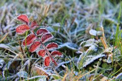 A taste of winter Royalty Free Stock Photography