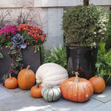 Tasteful Fall Decorations. Tasteful home decorations welcoming the fall season Royalty Free Stock Image