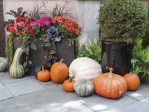 Tasteful Fall Decorations Royalty Free Stock Image
