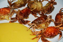 Tasteful shell crabs,  on white background Royalty Free Stock Photos