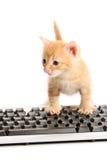 Tastiera funzionante del ½ N del ¿ del ï del gattino di affari Fotografie Stock