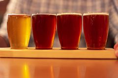 Tasting craft beer samples from a flight. Samples of craft beer lined up on the bar for a tasting royalty free stock photos