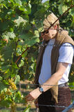 Tasting the grapes. Farmer checking the wine grapes Royalty Free Stock Photos