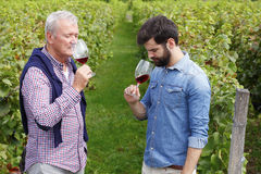 Tasting red wine. Portrait of winemakers smelling a glass of red wine at vineyard. Senior owner of vinery and young professional men tasting new red wine and royalty free stock photo