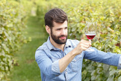 Tasting the wine. Portrait of young winemaking standing at vineyard and tasting a glass of red vine. Small business Royalty Free Stock Images