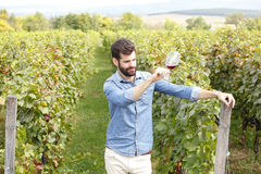 Tasting the wine. Portrait of young winemaking standing at vineyard and tasting a glass of red vine. Small business royalty free stock image