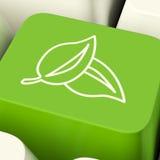 Tasto del computer dell'icona delle foglie nel verde che mostra riciclaggio e Eco Frie Fotografia Stock