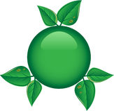 Tasto verde con i fogli Fotografia Stock
